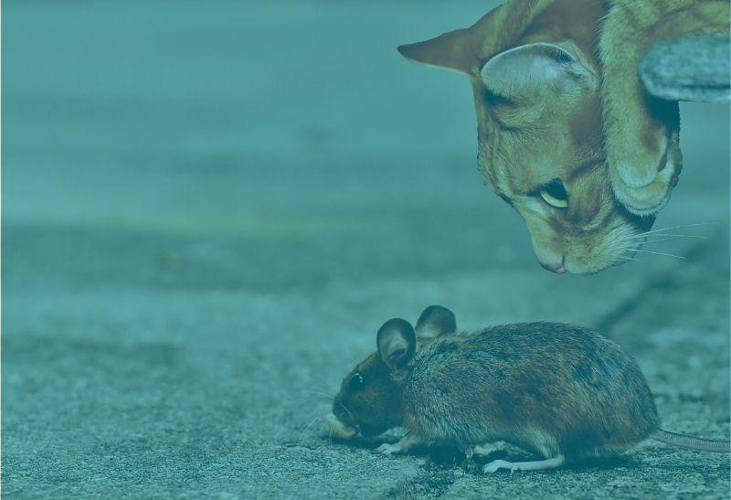 Katz und Maus in Gesellschaft