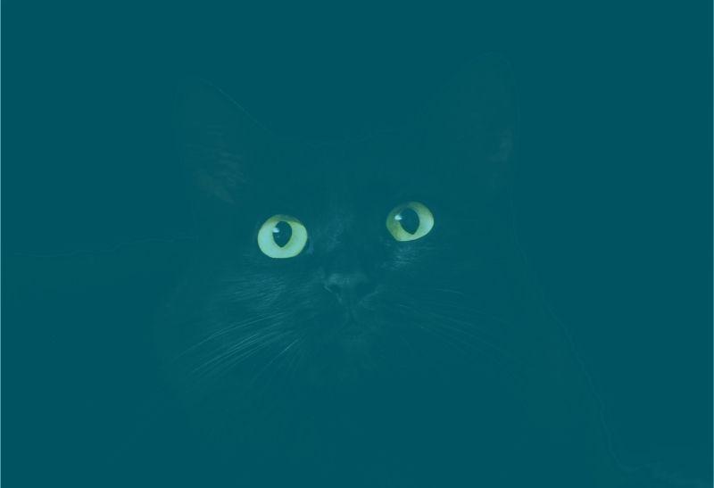 schwarze katze fürchten