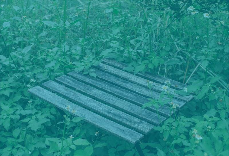 Tischlein deck dich im wald